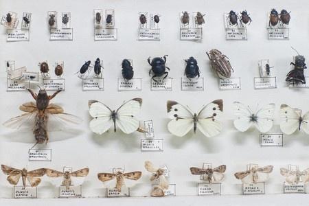 taxonomy Linné